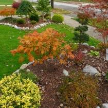 Acer-japonicum-Aconitifolium