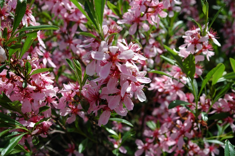 Цветы деревья фото и названия