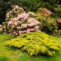 Rhododendron-Park-City-of-Kenmore-Washington-State