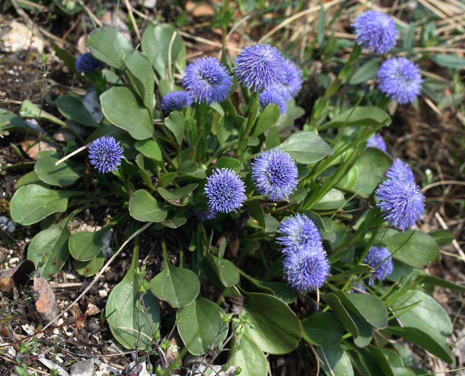 сайт цветы и цветки