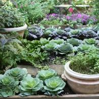 смешанные посадки цветов и овощей в огороде