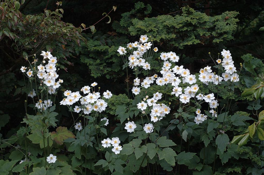 Фото какие цветы цветут осенью 165
