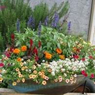 алиссум в качестве подбоя в цветочной композиции
