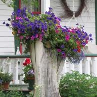 клумба из спиленного старого дерева