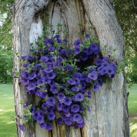 цветы в старом дереве