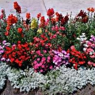 цветочные бордюры_фото