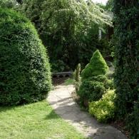 хвойные вдоль садовых дорожек