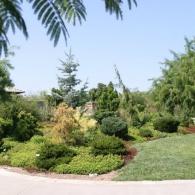 сад хвойных