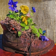 цветы в старом башмаке