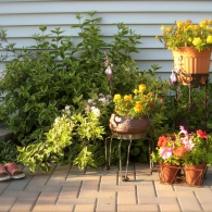 композиция из горшечных растений у стены дома
