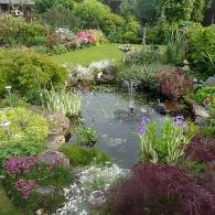 живописная растительность вокруг водоема с фонтаном