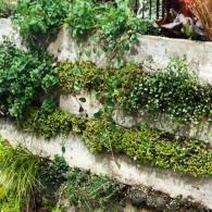 палетт с растениями