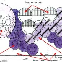 Схема цветника с колокольчиками