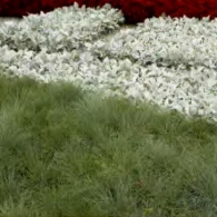 10_декоративно-лиственные растения_фото