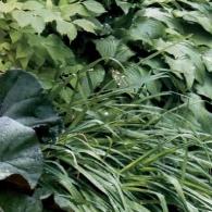 112_декоративно-лиственные растения_фото