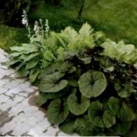 3_декоративно-лиственные растения_фото