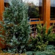 4_декоративно-лиственные растения_фото