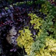 7_декоративно-лиственные растения_фото