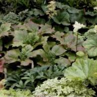 8_декоративно-лиственные растения_фото