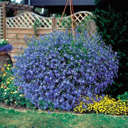 Интернетмагазин для садоводов
