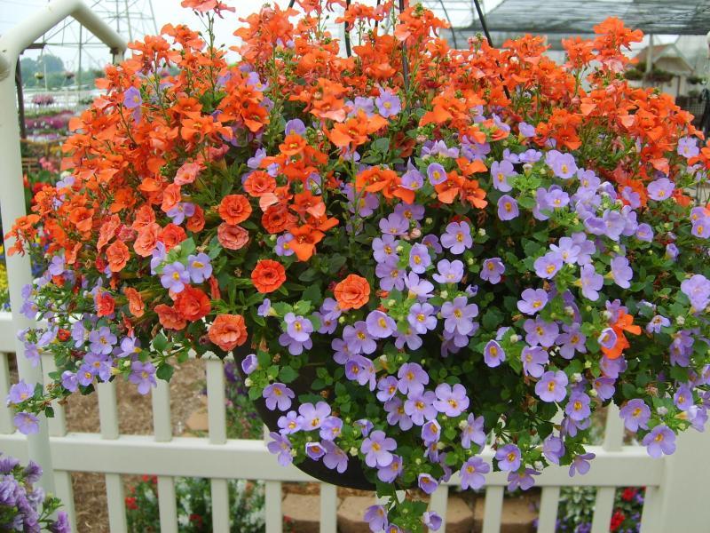 надписи туалетах садовые ампельные цветы названия и фото однокомнатную