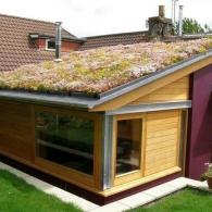 озеленение крыши пристройки