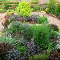 растения в палисаднике