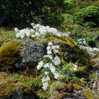 В Эдинбургском ботаническом саду