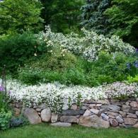 растения на подпорной стенке