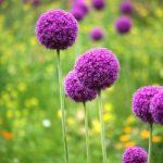 декоративные луки в саду_фото