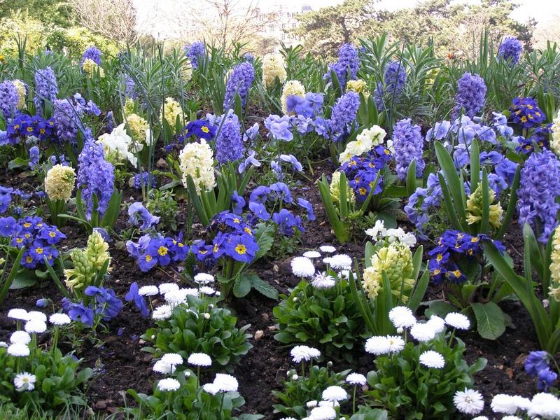 Цветы голубые и синие
