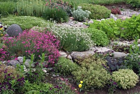 растения для альпийской горки, фото