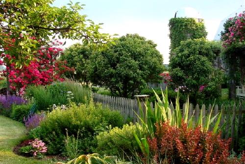 Лето завершается, но в саду по-прежнему ярко и красочно.  В полную силу цветут всевозможные однолетники.