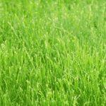 технология посадки газона своими руками