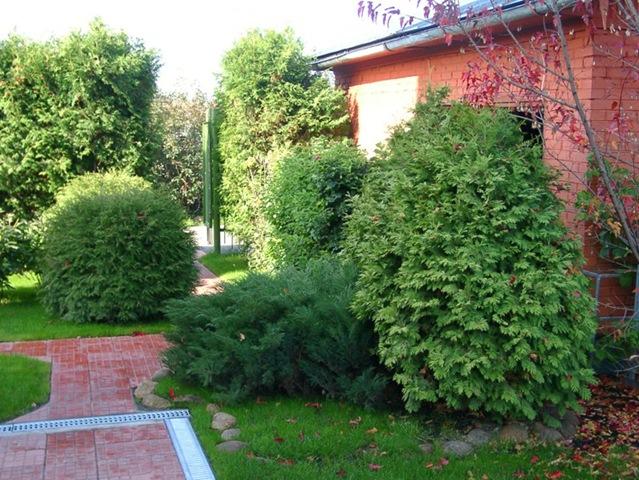 Деревья и кустарники должны, прежде всего, хорошо смотреться в компании с другими растениями.  А в совокупности они...