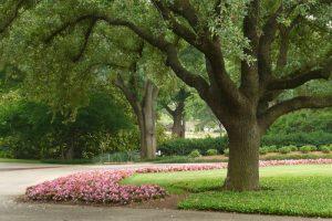 декоративные деревья для сада