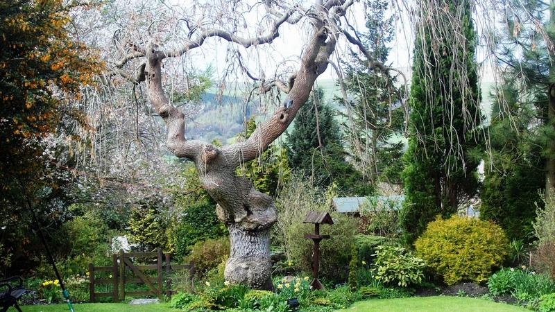 декоративные деревья для японского сада