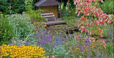 сентябрьские работы в саду