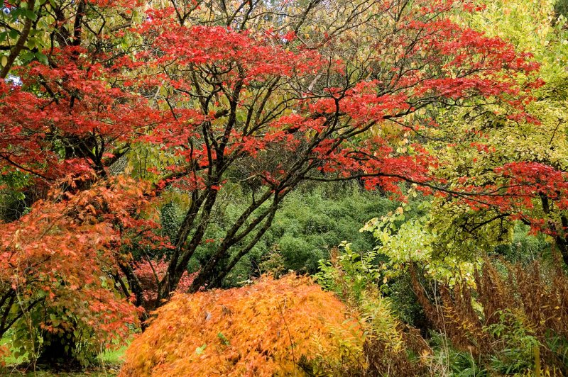 http://sazhaemsad.ru/wp-content/uploads/2011/10/autumn-river-garden.jpg