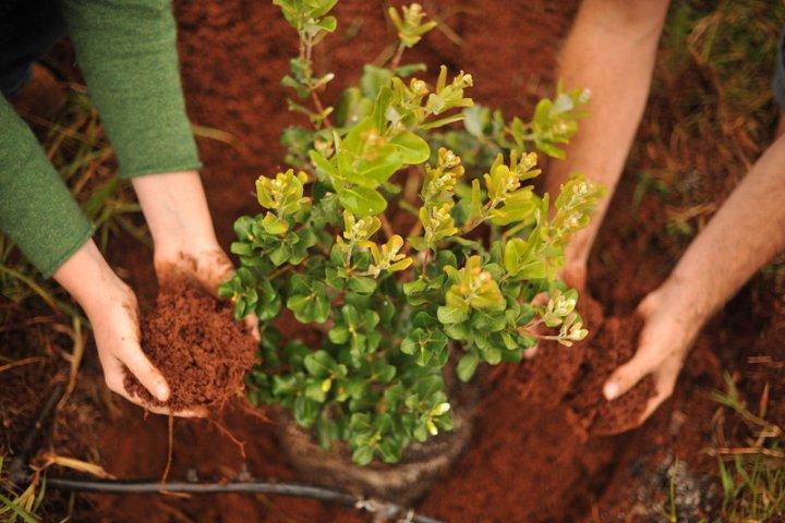 Правильный выбор растения для вашего
