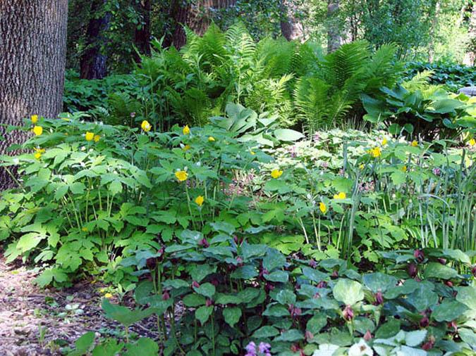 shade garden in May