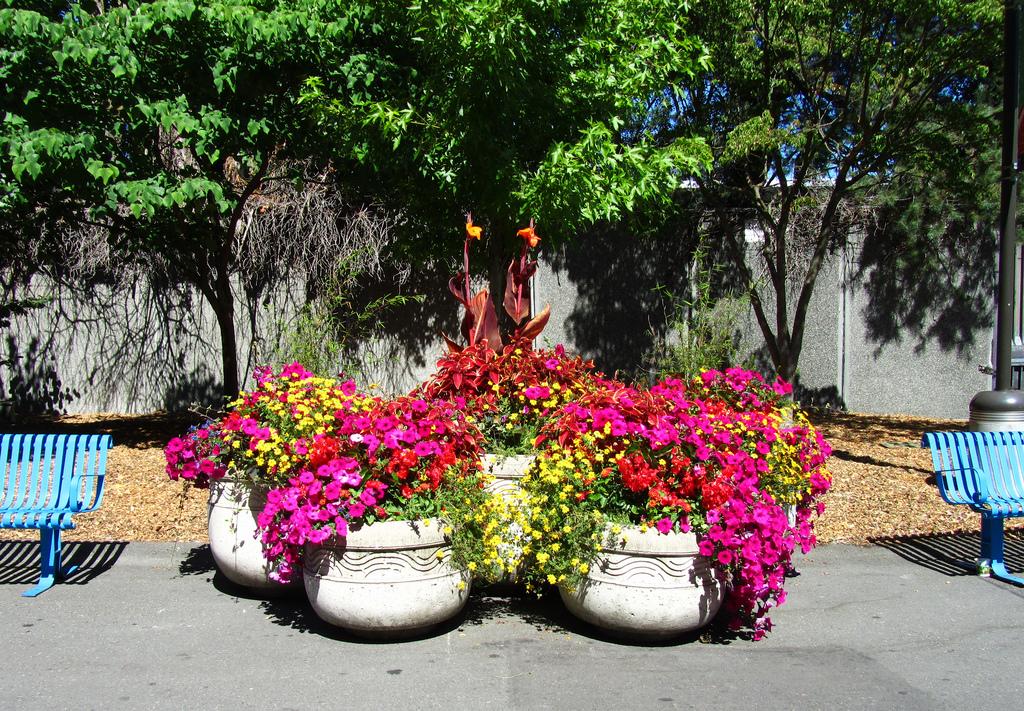 Цветочные композиции на клумбах фото