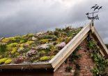 сад на крыше фото
