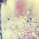красивые растения зимой